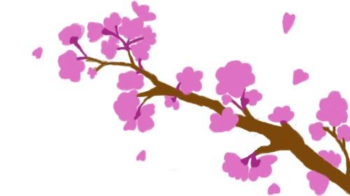a branch of Sakura tree