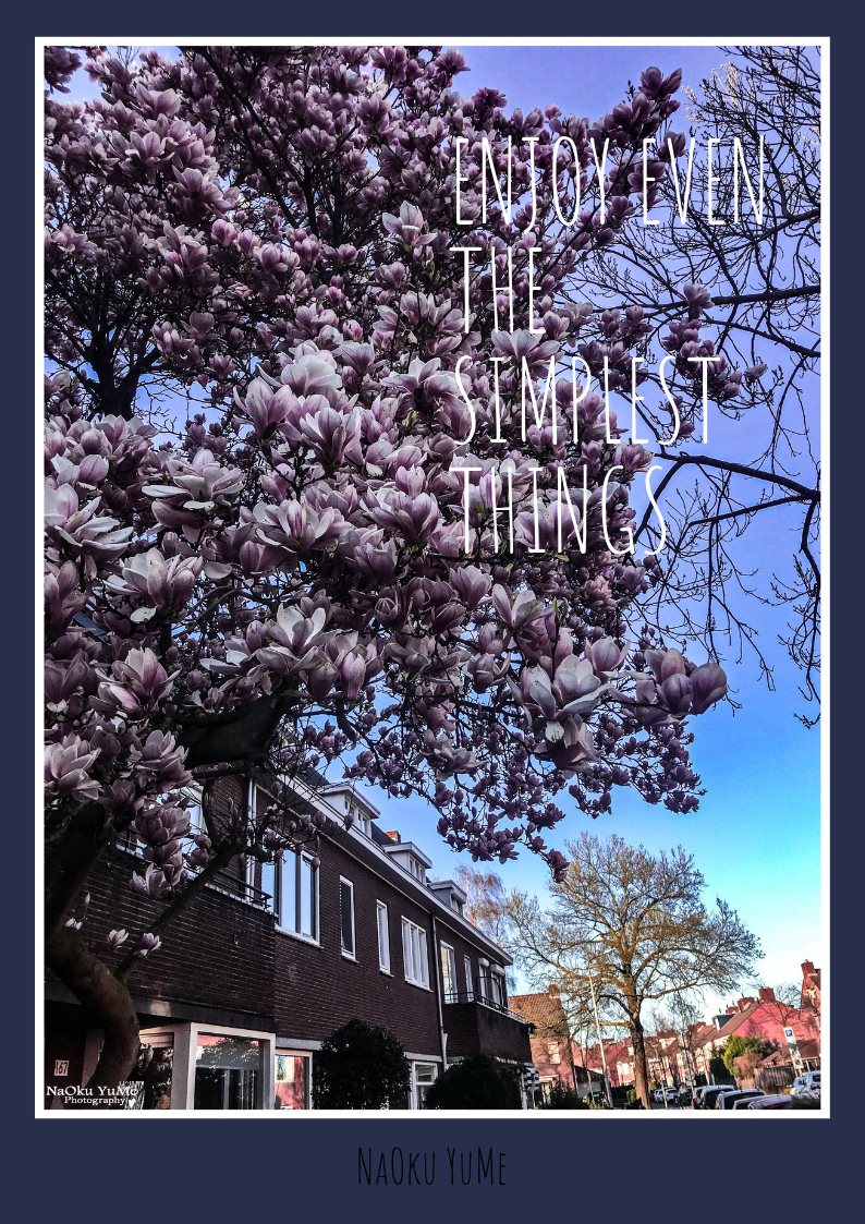 Beautiful tree blossoming in the city